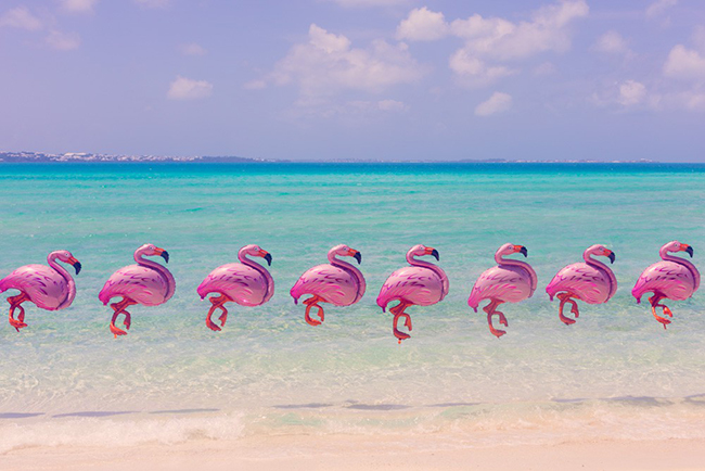 bermuda_flamingos_final_2